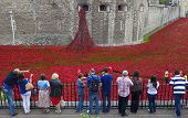 Tourists At The Tower Of London Looking At The Poppy Installation