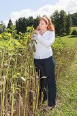 Chubby young red-haired woman controls the maturation of a sunflower