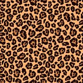 picture of furry animal  - Animal print - JPG