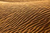 Rippled Sand Waves In The Desert