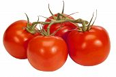 Vine Ripened Tomatoes Isolated