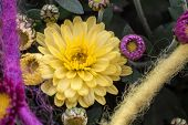 Chrysanthemums as decoration