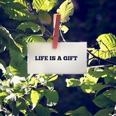 image of pegging  - Life is a Gift inspirational and motivational message handwritten on a white card or sign hanging by a clothes peg from a green leafy branch outdoors - JPG
