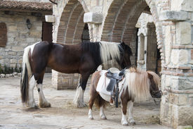 stock photo of big horse  - big horse and small pony to the stable - JPG