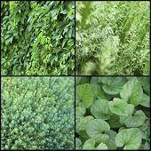 Green plants samples collage