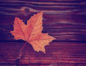 a leaf on a wooden background toned with a retro vintage instagram filter effect