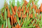 Close-up Of The Fresh Carrots.