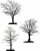 illustration with bare trees silhouette isolated on white background
