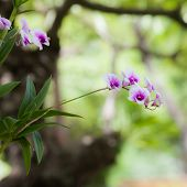 pic of orquidea  - stock photo orchid colorful with pink purple white and green shade under the sunlight - JPG
