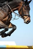 Close Up Of Show Jumping Horse