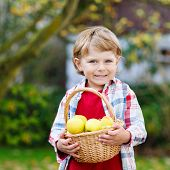 Preschool Kid Boy With Fresh Apples In Home's Garden, Outdoors
