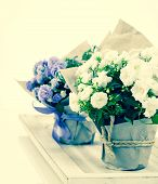 Campanula Terry With Blue And White Flowers In Paper Packaging