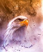 Symbol of American Freedom, wild bald eagle on abstract background