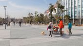People Walking With A Dogs