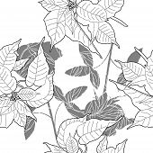 pic of poinsettias  - Seamless pattern with black and white poinsettia - JPG