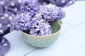 Blue, purple hyacinth flowers in pale green bowl