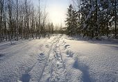 winter landscape. track from wide skis