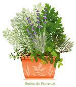Herbes de Provence, Embossed Terra Cotta Planter