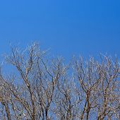 Dry Branch Of Tree Against Blue Sky