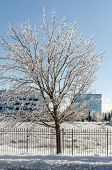 image of freezing  - Trees and streets of Canadian town after a freezing rain storm - JPG
