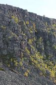 stock photo of century plant  - Rock cliff in Sweden with sparse plants - JPG