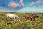 skyline,meadow and horse in tibet