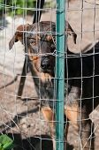 pic of stray dog  - Stray dog behind the corral of a dog refuge - JPG
