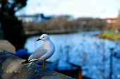 One sea gull sit at edge of bridge