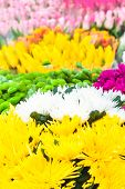 Colorful Background Of Vivid Flowers In Bloom