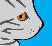 Proud Profile Gray Cat