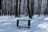 Benches For Rest