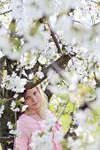 beautiful sakura abstract natural background spring