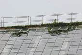 picture of bannister  - Plants growing through the roof of a greenhouse - JPG