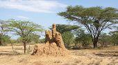 stock photo of termite  - Termite nest in the south of Ethiopia - JPG