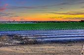Farming in the suburbs