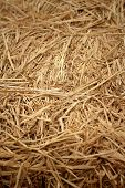 Brown Of Rice Straw In The Field.