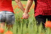 stock photo of red back  - Back view of a romantic couple holding hands in a field with red flowers - JPG