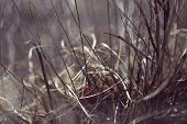 image of dry grass  - Autumn dry grass - JPG