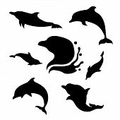 Постер, плакат: Dolphin Set Vector