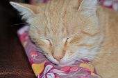 pic of judas  - moustached foxy cat sleeping on mat at home - JPG