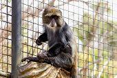 pic of marmosets  - Monkey sitting on wood log in zoo cel - JPG
