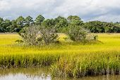 image of marshes  - Brilliant Green Wetland Marsh Grass Growing Under Blue October Skies - JPG