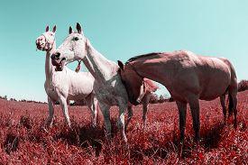 picture of distort  - Herd of horses - JPG