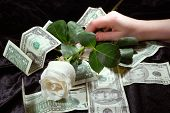White Rose On A Background The Money.