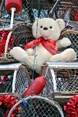 Teddy on Valentine's Lobster Traps