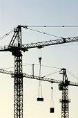 Cranes Vertical