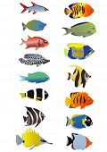 Two line of tropical fishes, vector illustration
