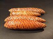 Conifer Cones