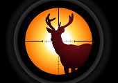 foto of rifle  - Vector illustration of a rifle lens aiming a deer - JPG