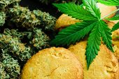Cookies With Cannabis Leaves And Buds Of Marijuana On The Table. A Can Of Cannabis Buds Concept Of C poster